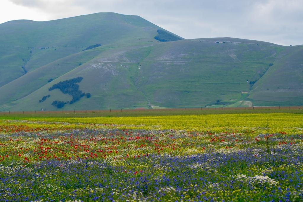 fioritura castelluccio norcia umbria monti sibillini